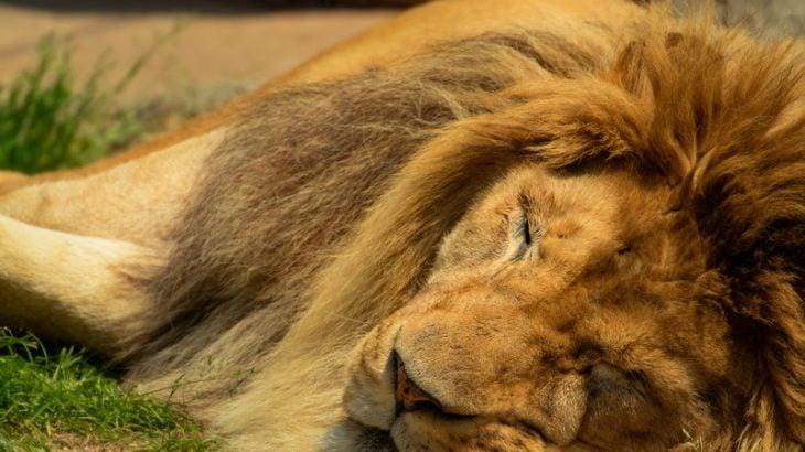 【LION MEDIA】タイトルロゴのサイズが小さくて変更したい方へ